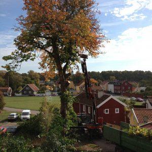 Beskärning Nyköping