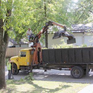Bortforsling av träd